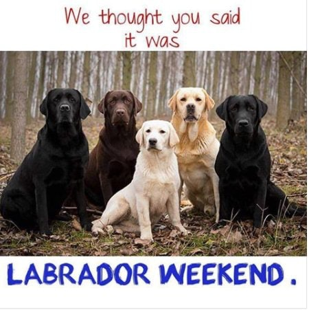 An Adorable Holiday Meme for Labor Day