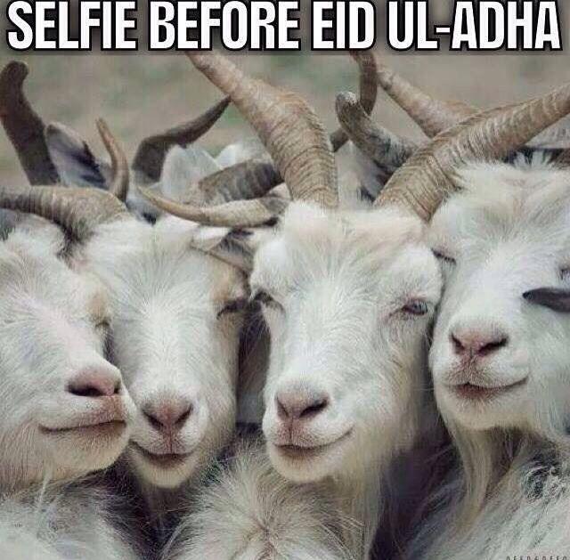 Eid Ul Adha Memes