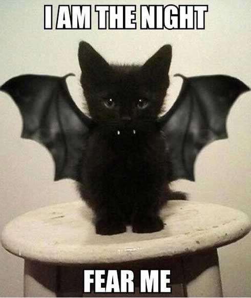 Halloween Meme 2019