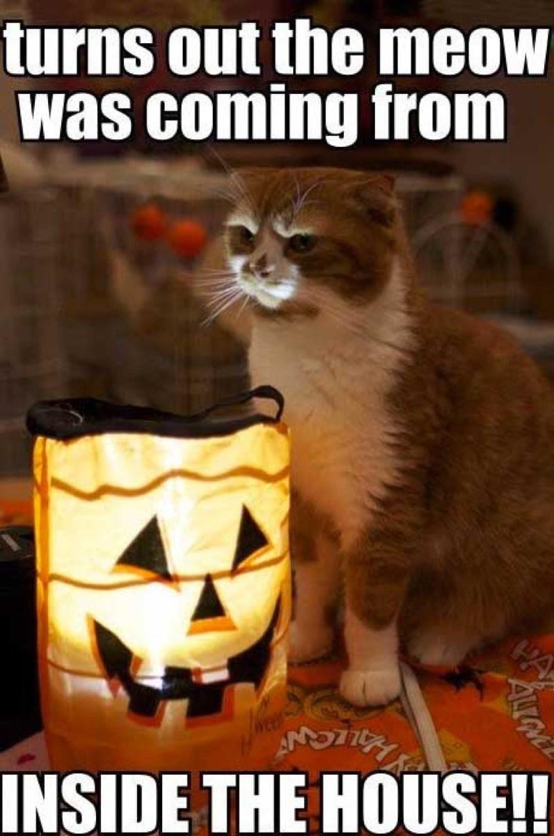 Halloween Memes Funny Jokes To Share On Instagram Whatsapp