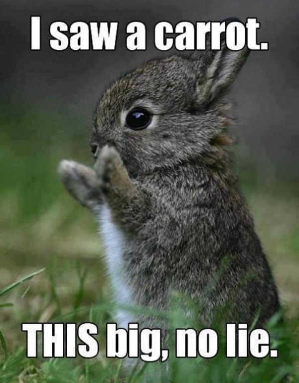 Happy Easter 2020 Memes Funny Jokes To Share Via Instagram